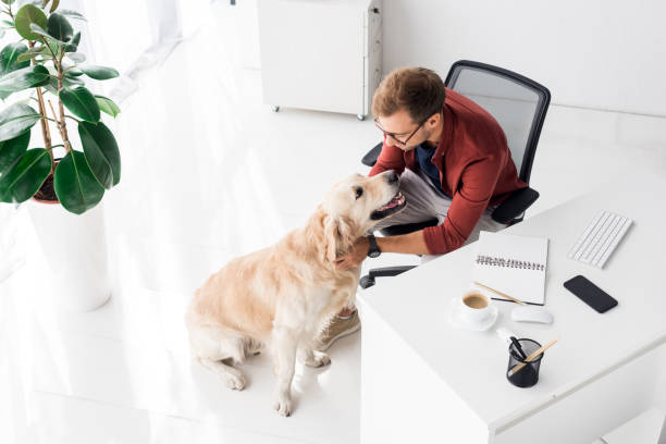 Businessman sitting on chair and stroking dog in office picture id1042933038?b=1&k=6&m=1042933038&s=612x612&w=0&h=qjg5gvchp2 lpn9tuzxmja1pqbpyxfkw11vapronsmy=