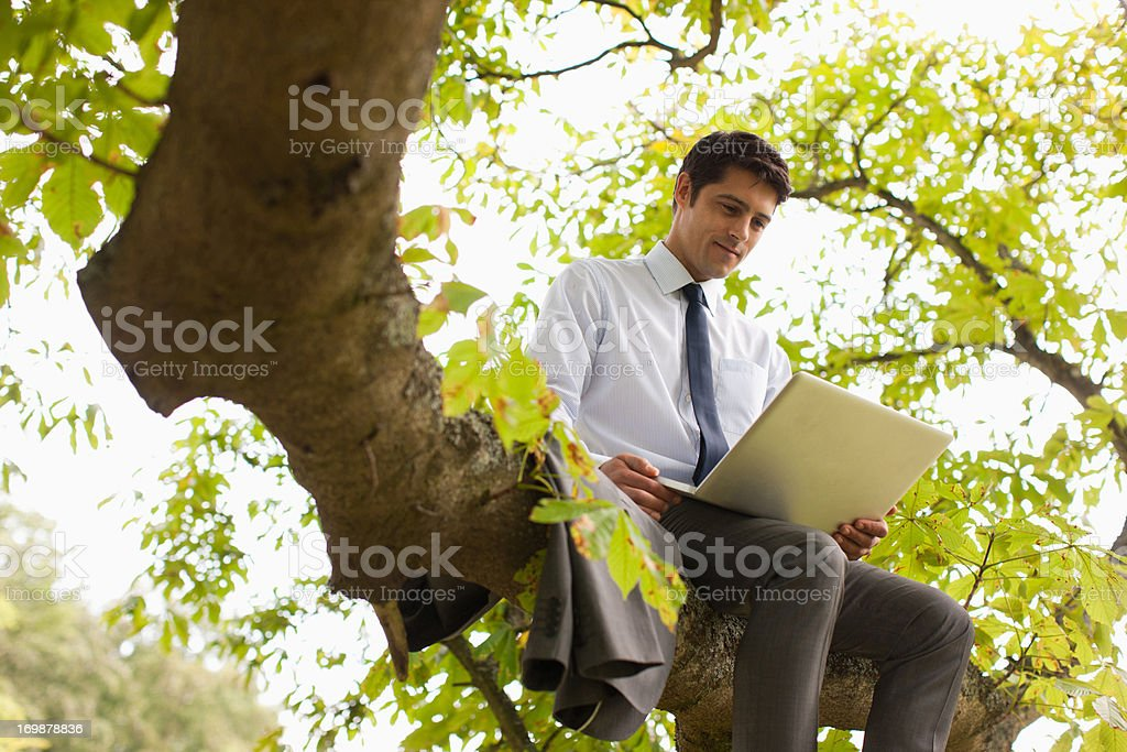 Businessman using laptop on tree branch stock photo