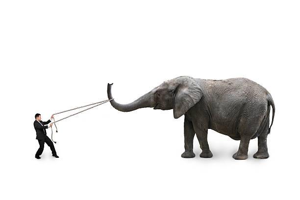 Geschäftsmann am Seil ziehen Elefant – Foto