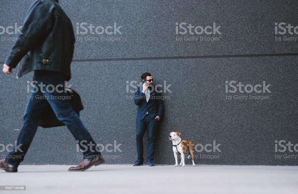 Businessman walking dog at street. Best friends walking. Handsome...