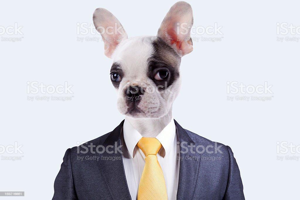 Geschäftsmann mit einem Hund Gesicht – Foto