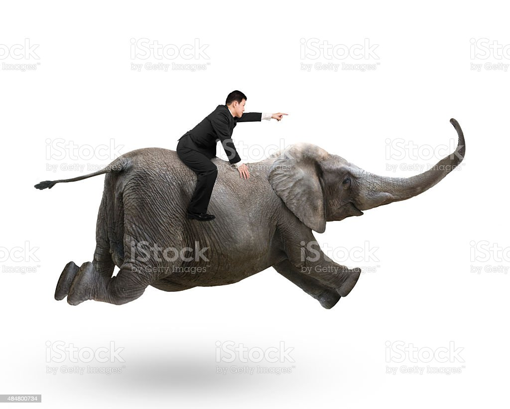 Businessman with pointing finger gesture riding on elephant stock photo