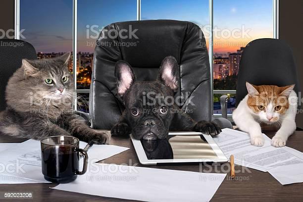 Businessmen in office picture id592023208?b=1&k=6&m=592023208&s=612x612&h=vwhxhb7kj99 2 qsht2rsfghef jc4etduoyugy57h0=