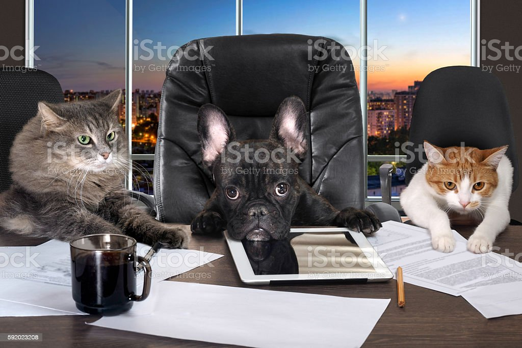 Businessmen in office. stock photo
