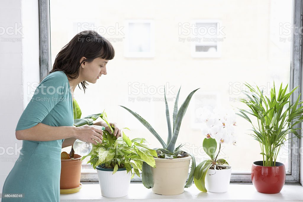 Businesswoman Sprays Plants In Flowerpots stock photo