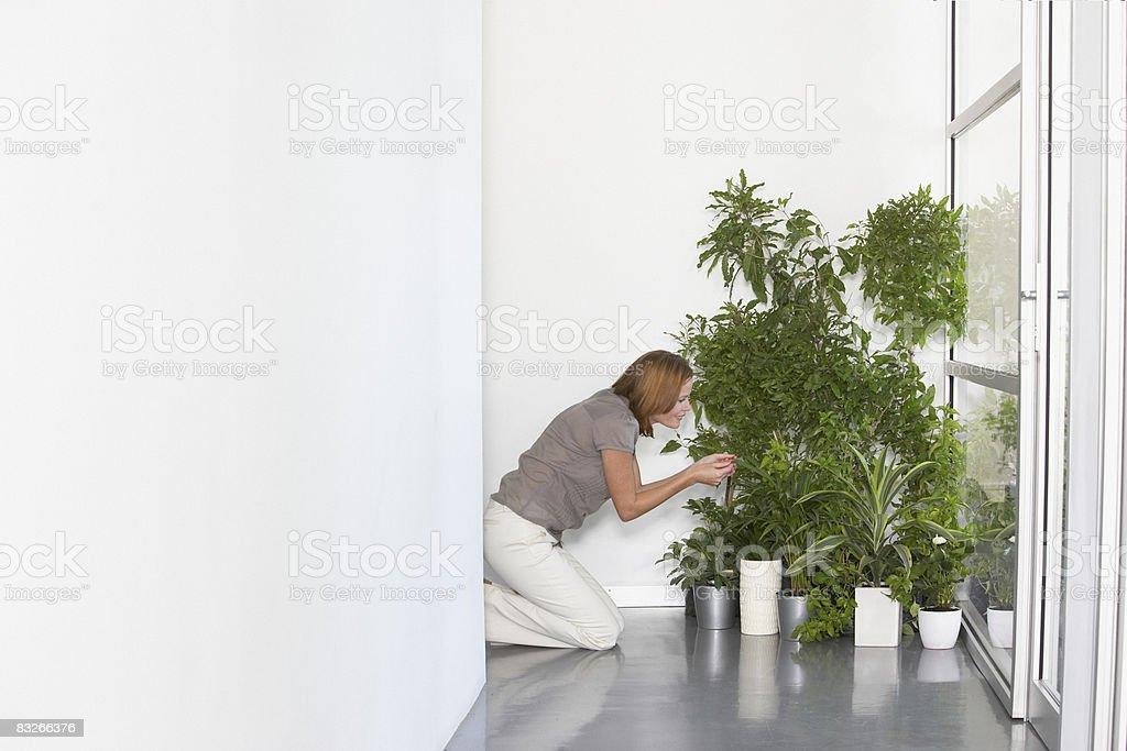 Empresaria tending plantas de oficina foto de stock libre de derechos