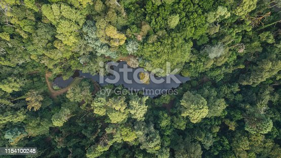 Bussaco or Buçaco National Forest from aerial view in Portugal