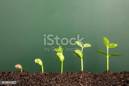bussiness growth:new life growing before blackboard