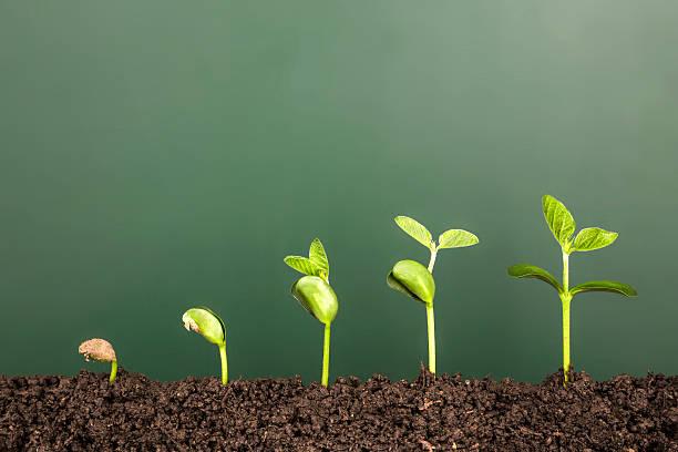 Bussiness growthnew life growing before blackboard picture id524541622?b=1&k=6&m=524541622&s=612x612&w=0&h=crr kdfq9iwwfyyuexrda5gfjgaurzk hfioiga9xh4=