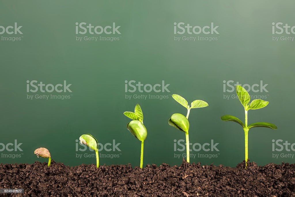 bussiness growth:new life growing before blackboard bildbanksfoto