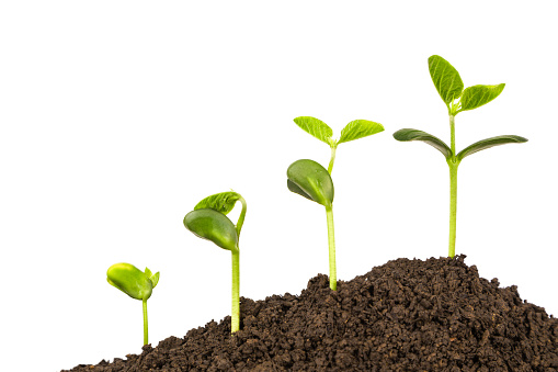 bussiness growth:new life growing in spring