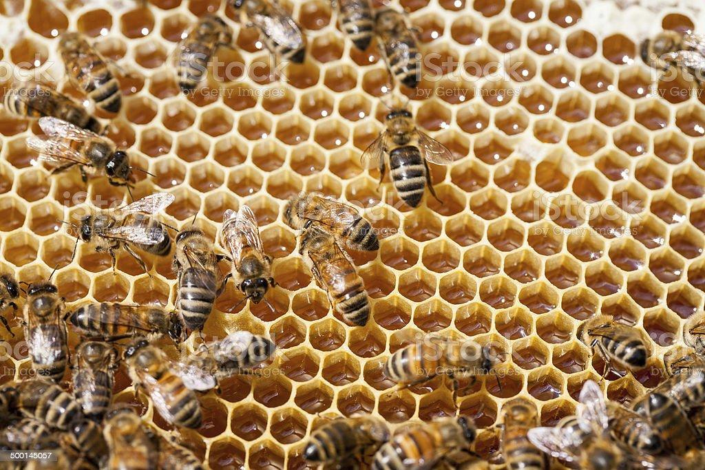 Famille de produire le miel - Photo
