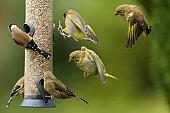istock Busy Bird Feeder 155599045