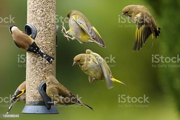Busy bird feeder picture id155599045?b=1&k=6&m=155599045&s=612x612&h=x4alwndpgx5e7vz4wyxuh6lj1vo1ytyboik etvo404=