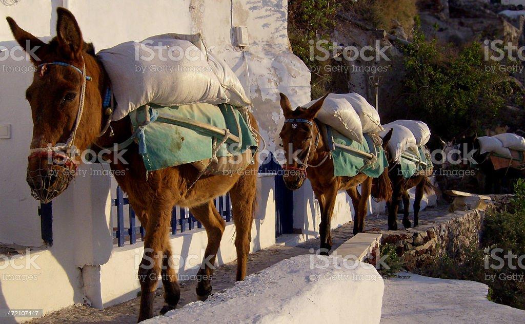 Busy Donkeys stock photo