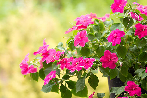 Beschäftigt Lizzie Blumen – Foto