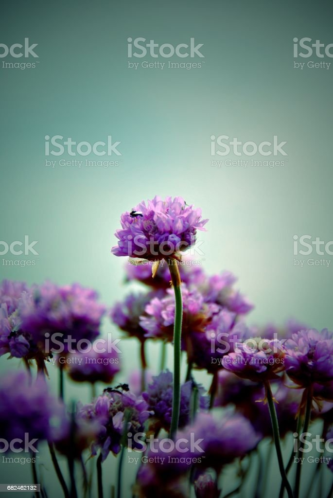 Busy Purple Nature royalty-free stock photo