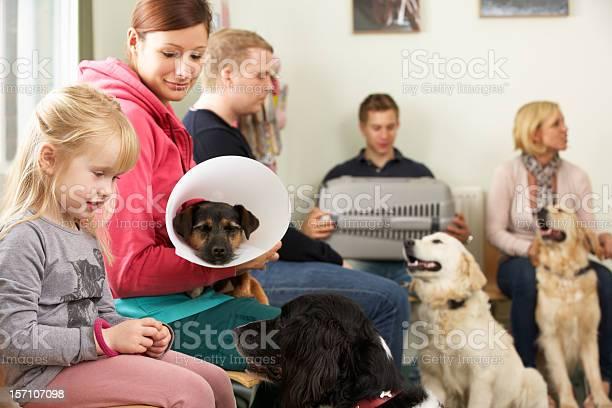 Busy waiting room in veterinary surgery picture id157107098?b=1&k=6&m=157107098&s=612x612&h=qyrwyuts718diupfcctqnvgdcktjxpuxtdydim1 j y=