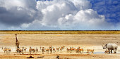 vibrant waterhole with giraffe, black rhinoceros springbok and ominous rain clouds threaten