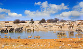 Lots of animals drinking at a waterhole in Etosha with a blue cloudy bright sky.