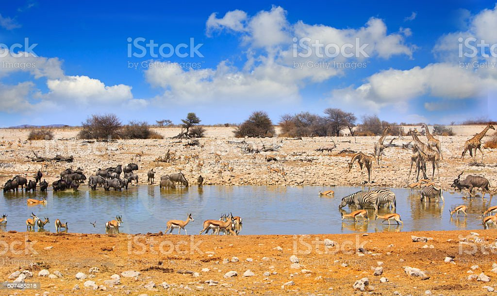 Busy waterhole with vibrant blue cloudy sky stock photo