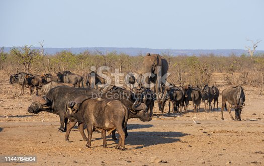 A busy watering hole in Southern African savanna