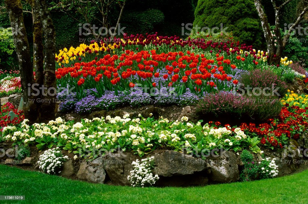Butchart Garden Tulip Flower Landscaping Victoria royalty-free stock photo