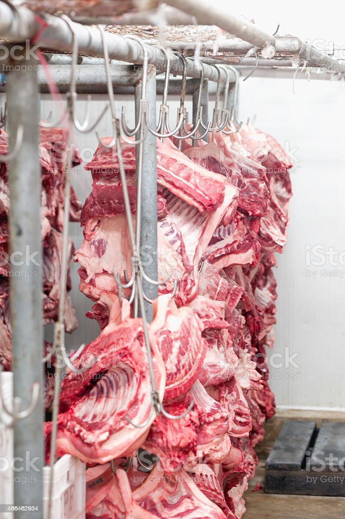 Butcher products. Processed pigs hanging in slaughter house stock photo