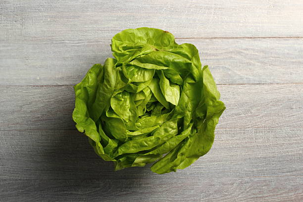 Butter Lettuce Butter Lettuce butterhead lettuce stock pictures, royalty-free photos & images