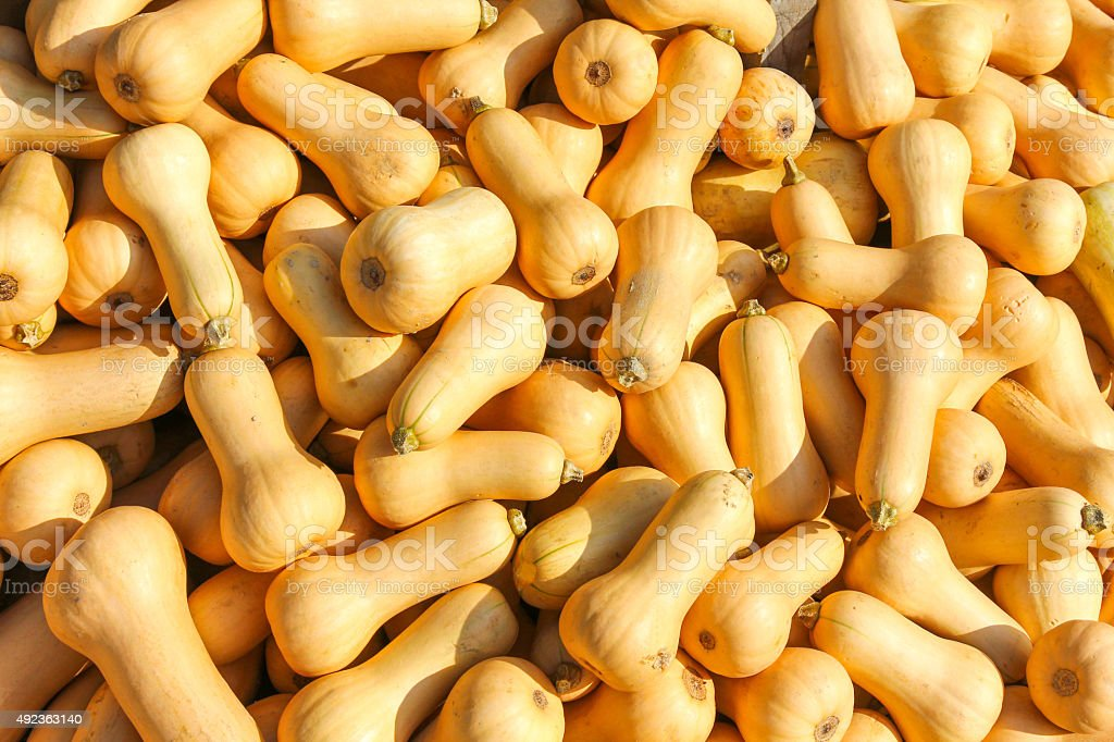 Butter Squash, Butternut pumpkin (Cucurbita moschata) stock photo