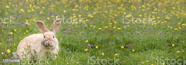 Buttercups and bunnys picture id172744458?b=1&k=6&m=172744458&s=612x612&h=crzxwpwgm0cpmcxvlxowi2odqtadzyw3xx9who3mmlc=