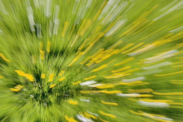 Buttercups in a Field - Abstract Zooming Background stock photo