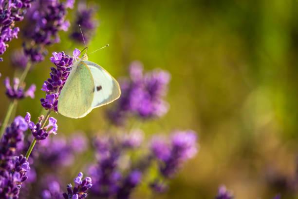 Butterffly and insects on a sunny day picture id1218045686?b=1&k=6&m=1218045686&s=612x612&w=0&h=yqtxncajbydaapg1lrloew1ltdv p k1enldtjylcgo=