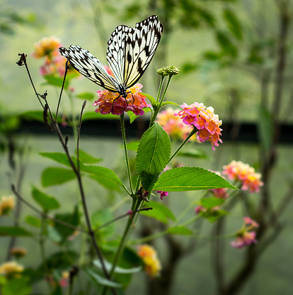 The image shows a butterfly on flowers