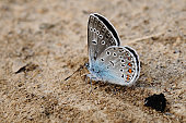 The small butterfly sits on the earth