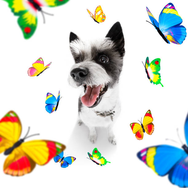 Butterflies and a dog in love picture id1160978013?b=1&k=6&m=1160978013&s=612x612&w=0&h=ce 6bkdp0 sq1xfdmbx5jsxozil yxsucqjk1oiqpeo=