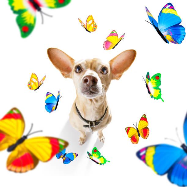 Butterflies and a dog in love picture id1160979539?b=1&k=6&m=1160979539&s=612x612&w=0&h=ogjfwixxtfsytjpf6pi4wqknhnzfhu5blfi9q00eg4u=