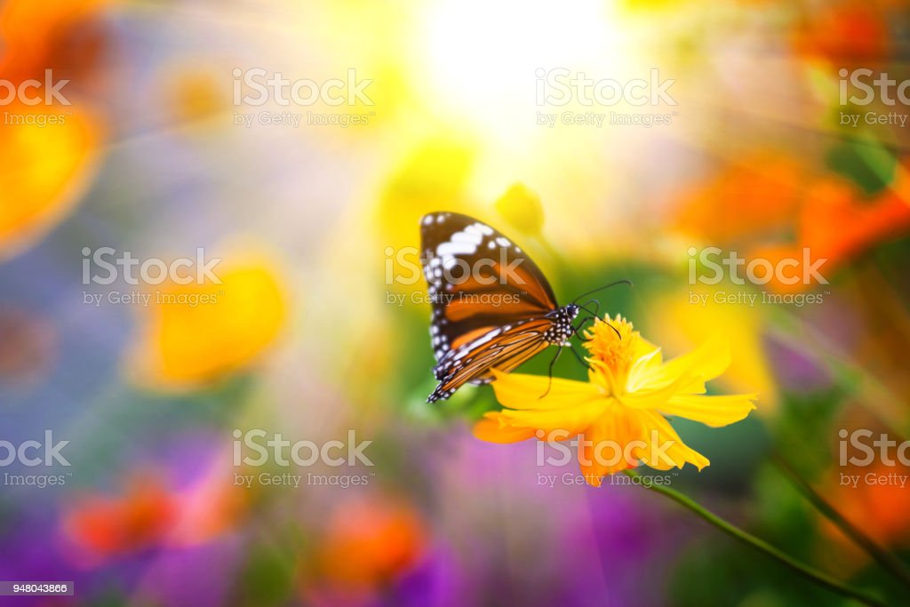 Butterflies and colorful flowers. stock photo