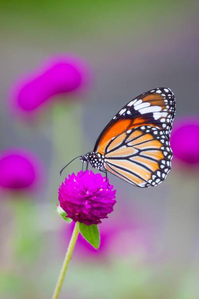 Butterflies and colorful flowers picture id948044172?b=1&k=6&m=948044172&s=612x612&w=0&h=5witsj8hvtk8okzfghk8gyyathghaisljfkivedx zo=