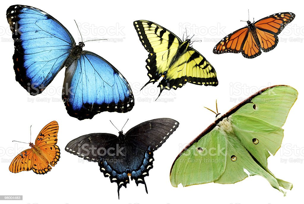 Butterflies and Moths on White Background royalty-free stock photo