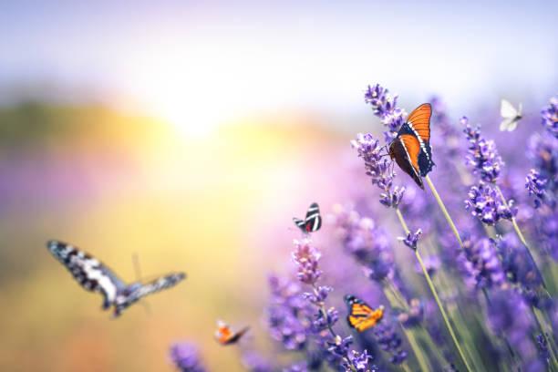 Butterflies at sunset picture id1206854782?b=1&k=6&m=1206854782&s=612x612&w=0&h=2i0l sd6jknxqscqggpszy hqbyngts313tcqu7rora=