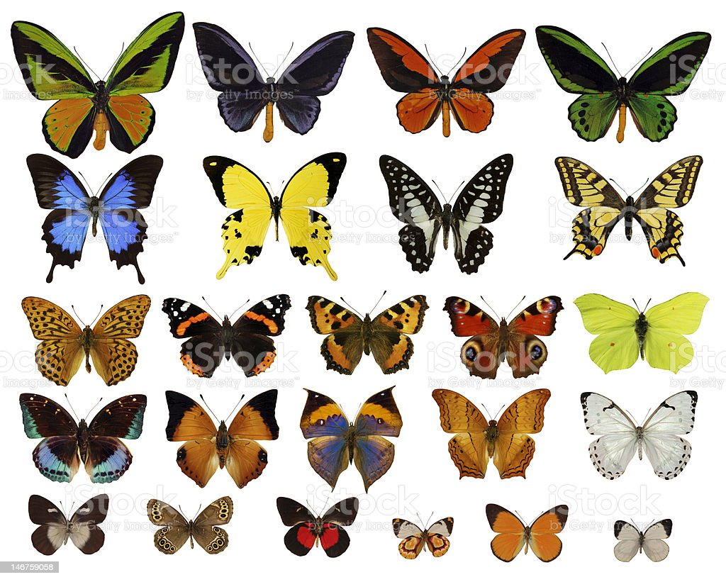 butterflies collection royalty-free stock photo