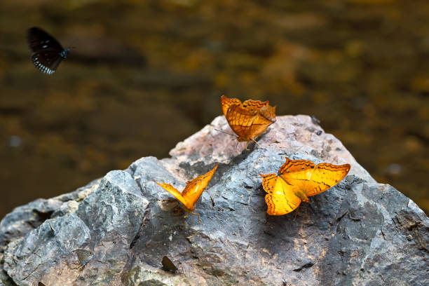 Butterflies flock in tropical rain forest picture id992863292?b=1&k=6&m=992863292&s=612x612&w=0&h=z0wumexnetpa8bivlheppbsjbdf1loomgmkmm1br7n4=
