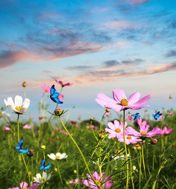 Schmetterlinge fliegen in die Blumen – Foto