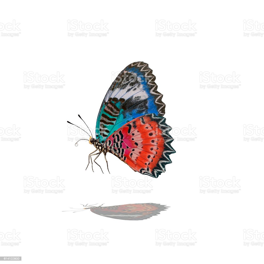 Butterflies flying stock photo