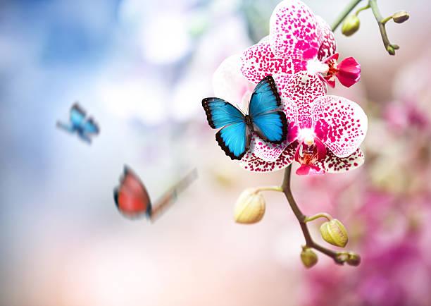 Butterflies in orchid garden picture id506860618?b=1&k=6&m=506860618&s=612x612&w=0&h=wrwbh agdl7ohd  cq89ki4wxwa1a1yxxsngw25y9uk=