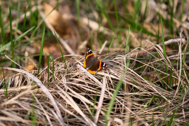 Butterflies in the Field stock photo