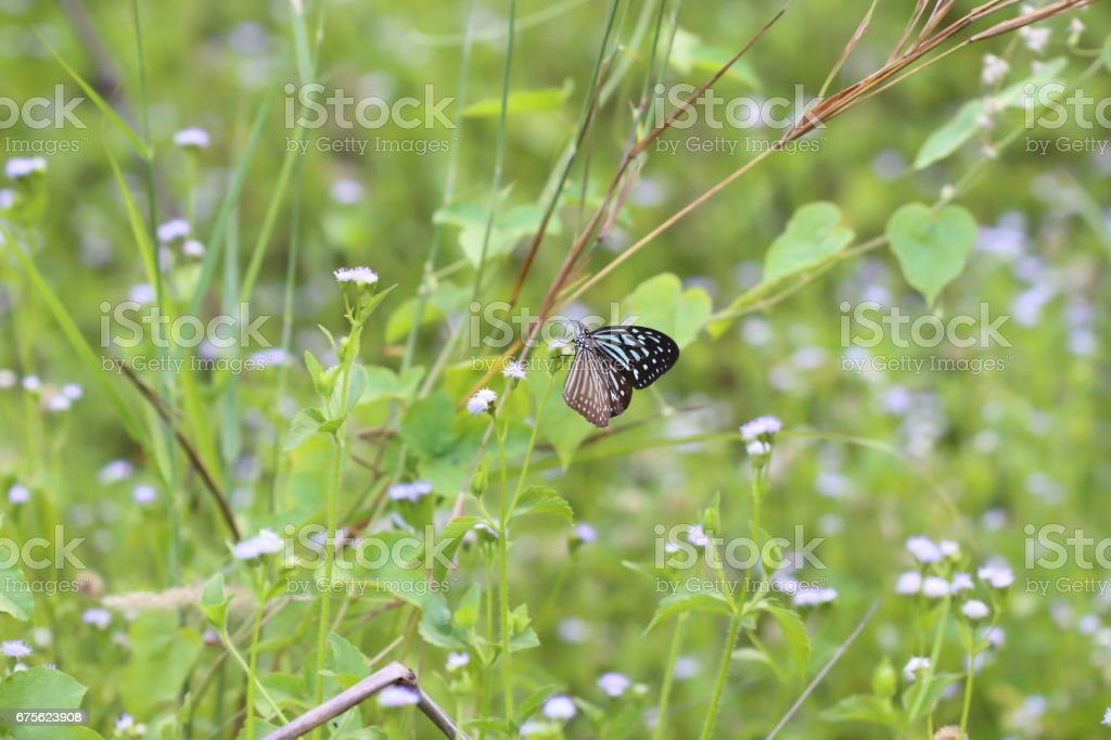 Butterflies live in gardens, beautifully patterned wings. royalty-free stock photo