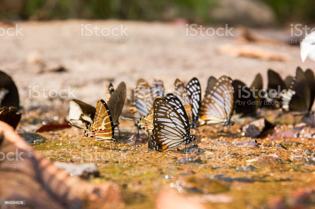 Butterflies live in the waterfall. - Royalty-free 2015 Stock Photo