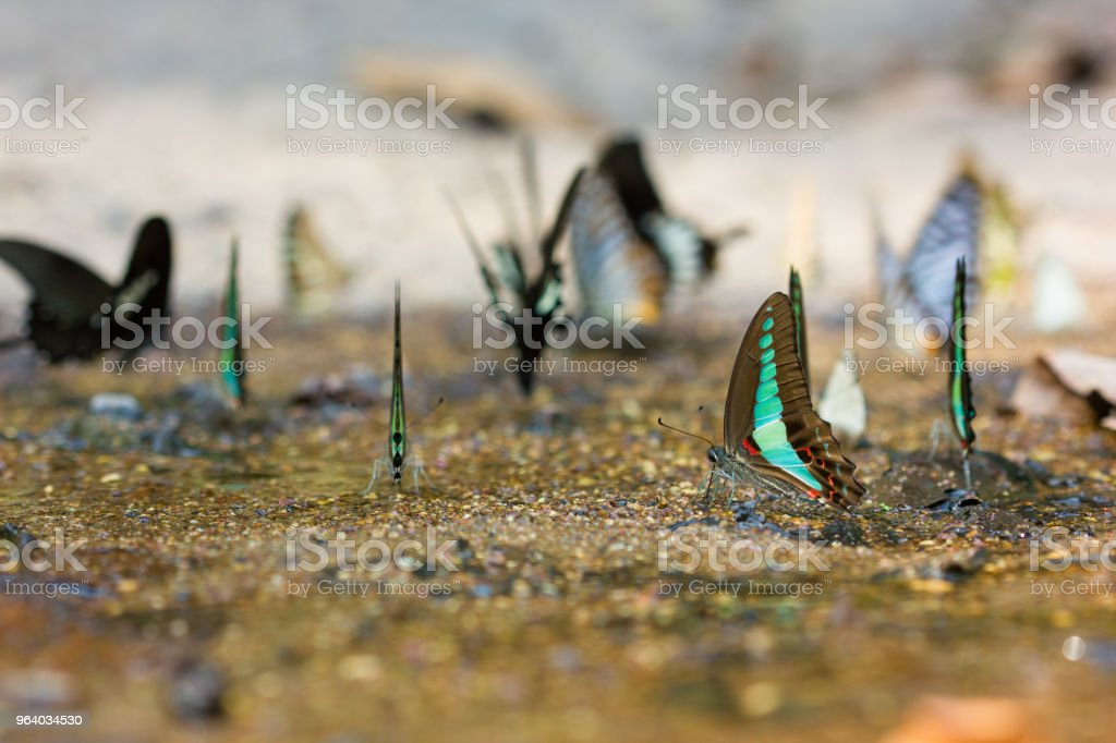 蝶は、滝に住んでいます。 - 2015年のロイヤリティフリーストックフォト